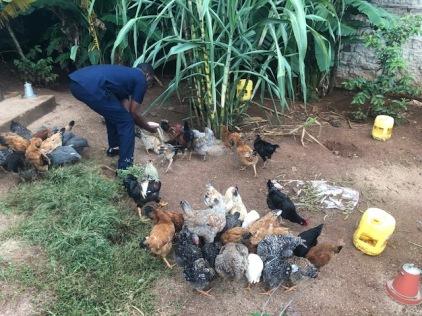 chicken IMG_2546